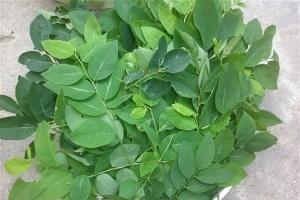 chon-rau-ngot-1423931903979-0-0-427-640-crop-1423931957906